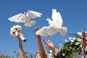 Свадебные голуби